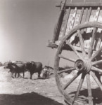Renos Evriviades WIDESON - Threshing - Asha, 1950
